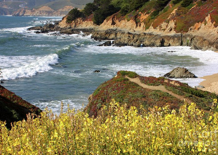 California Greeting Card featuring the photograph California Coast Overlook by Carol Groenen