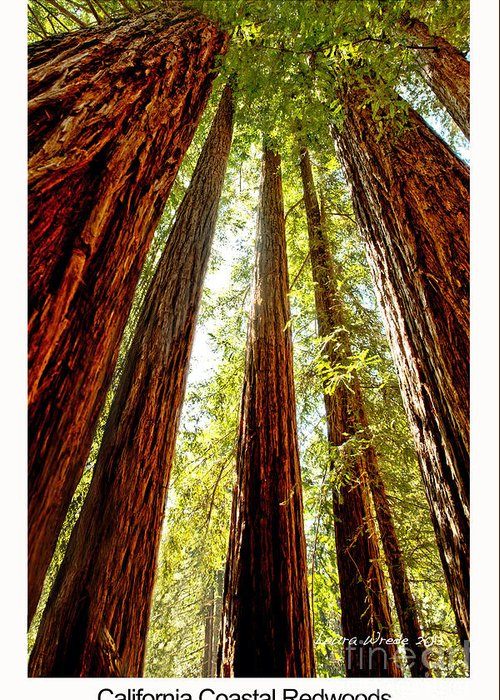 Redwoods Greeting Card featuring the photograph California Coastal Redwoods by Artist and Photographer Laura Wrede