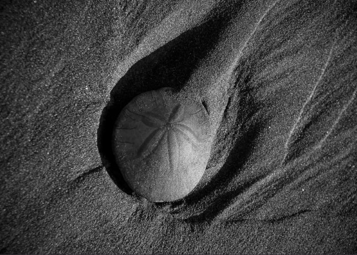 Landscape Greeting Card featuring the photograph California Sand Dollar by Puget Exposure