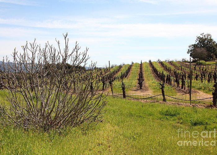 Sonoma Greeting Card featuring the photograph California Vineyards In Late Winter Just Before The Bloom 5d22121 by Wingsdomain Art and Photography