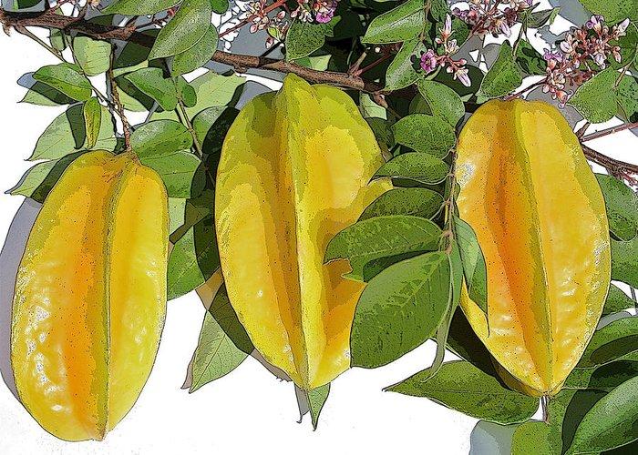 Carambola Fruit Greeting Card featuring the photograph Carambolas Starfruit Three Up by Olivia Novak