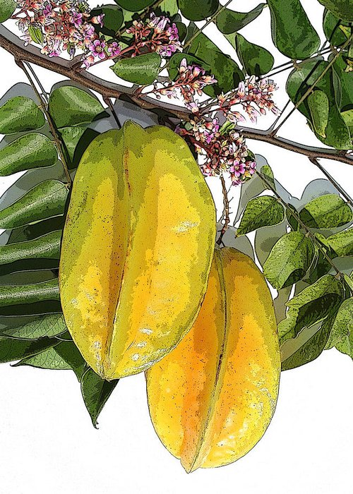 Carambola Fruit Greeting Card featuring the photograph Carambolas Starfruit Two Up by Olivia Novak