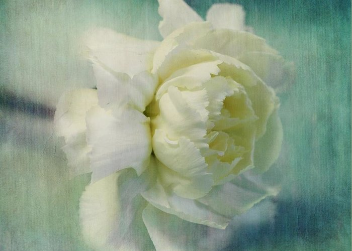 Carnation Greeting Card featuring the photograph Carnation by Priska Wettstein