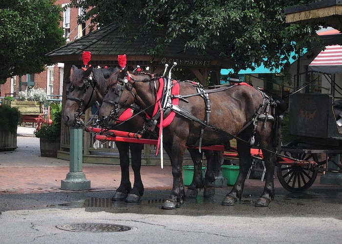 Horses Greeting Card featuring the photograph Carriage Horses At City Market by Linda Ryan