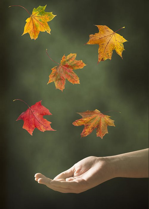 Hand Greeting Card featuring the photograph Catching Leaves by Amanda And Christopher Elwell