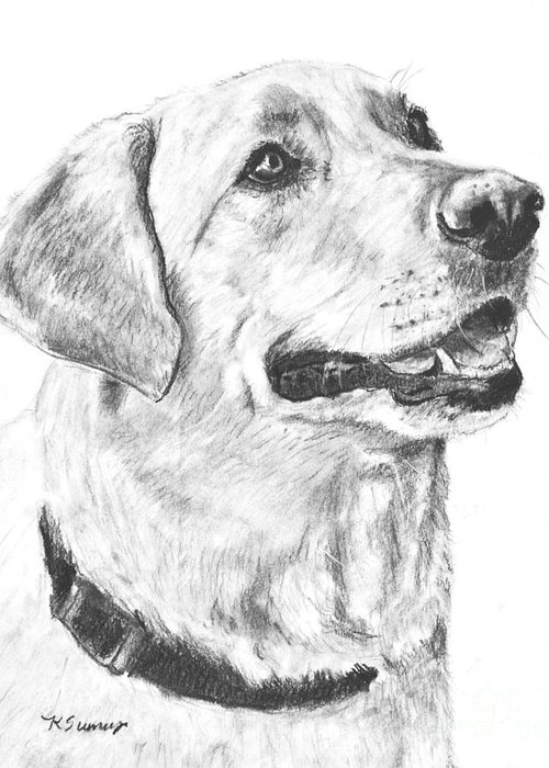 Yellow Greeting Card featuring the drawing Charcoal Drawing Yellow Lab In Profile by Kate Sumners