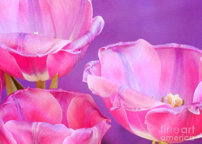 Fine Art Floral Abstractm Nature Bastract Greeting Card featuring the photograph Cheers by Irina Wardas