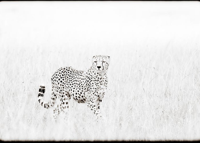 Africa Greeting Card featuring the photograph Cheetah In The Grass by Mike Gaudaur