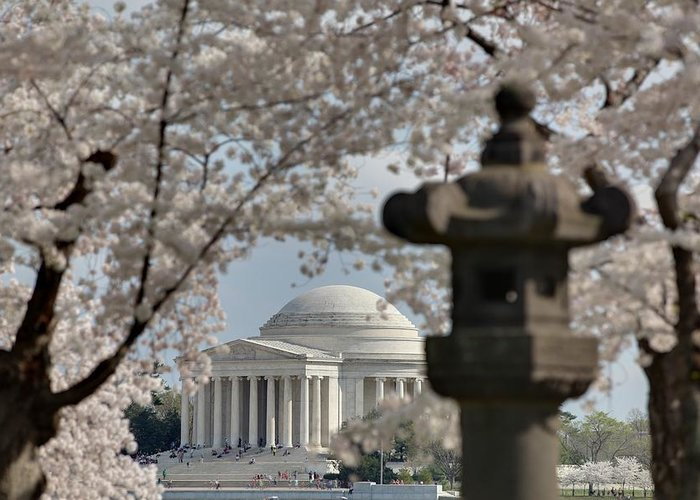 America Greeting Card featuring the photograph Cherry Blossoms With Jefferson Memorial - Washington Dc - 011326 by DC Photographer