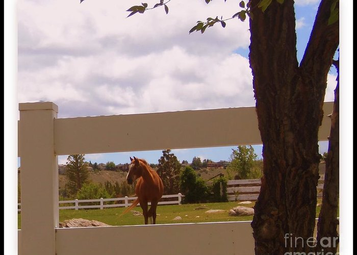 Horse Greeting Card featuring the photograph Chestnut Beauty by Bobbee Rickard