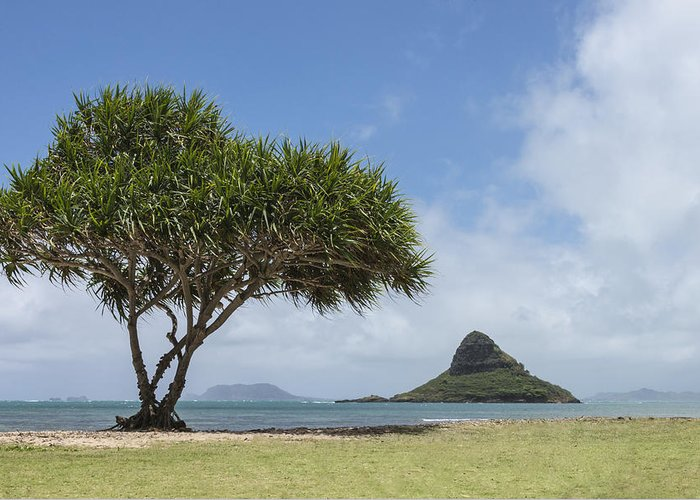 Chinamans Hat Island Tree Seascape Oahu Hawaii Hi Greeting Card featuring the photograph Chinamans Hat With Tree - Oahu Hawaii by Brian Harig
