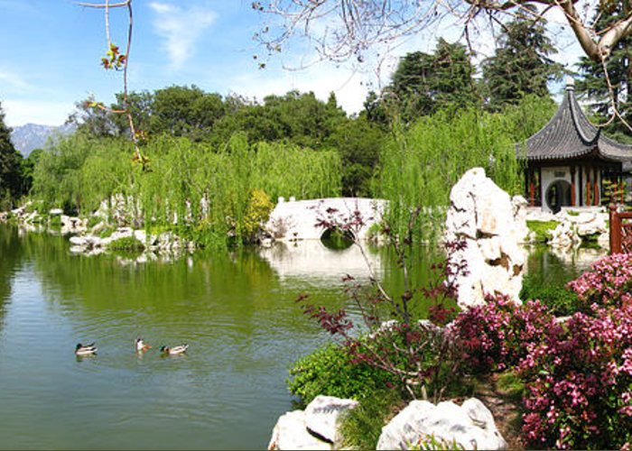 Digital Greeting Card featuring the photograph Chinese Gardens by Bedros Awak