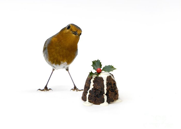 Christmas Greeting Card featuring the photograph Christmas Robin by Tim Gainey