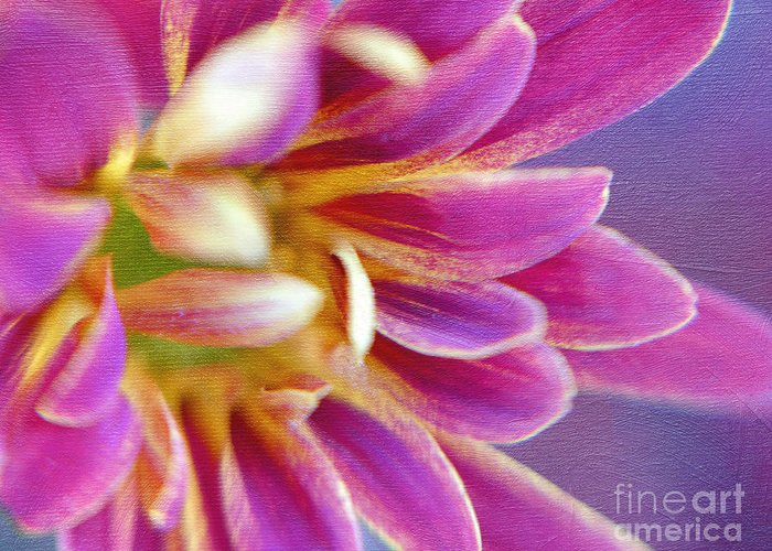 Hot Pink Daisy Greeting Card featuring the photograph Chrysanthemum Painting by Irina Wardas