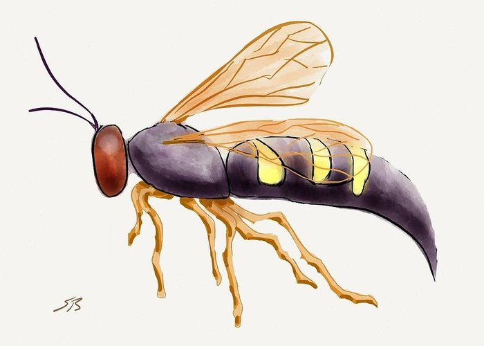 Wasp.insect Greeting Card featuring the digital art Cicada Killer Wasp by Stacy C Bottoms