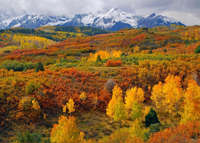 Autumn Greeting Card featuring the photograph Colorful Colorado At It's Best  by John Hoffman