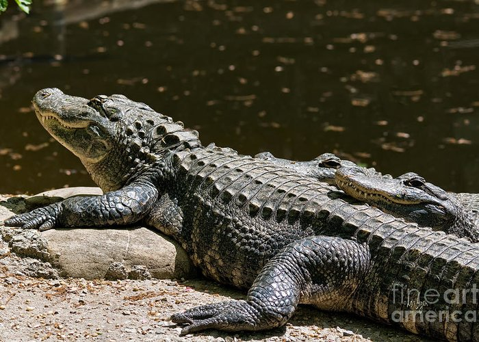 Alligator Greeting Card featuring the photograph Comfy Cozy by Lois Bryan