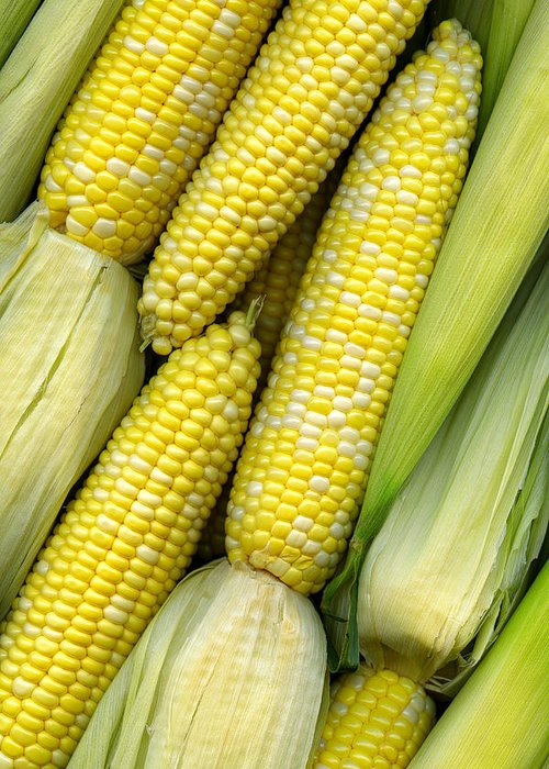 Corn Greeting Card featuring the photograph Corn On The Cob II by Tom Mc Nemar