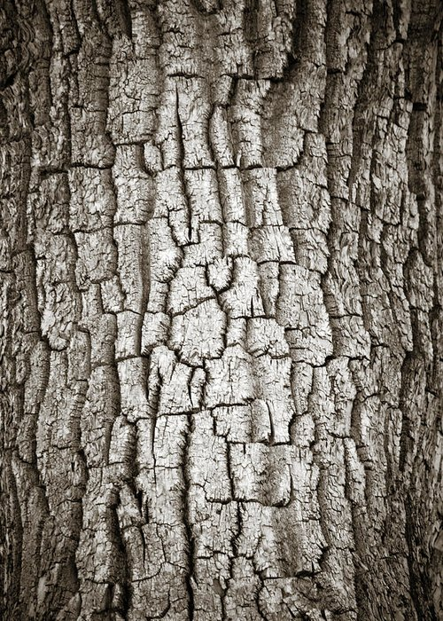 Cottonwood Greeting Card featuring the photograph Cottonwood Bark 1 by Marilyn Hunt