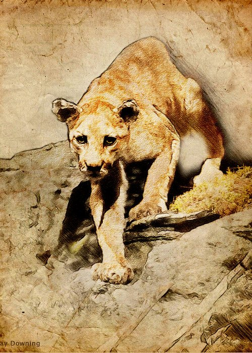 Puma Greeting Card featuring the digital art Cougar Hunting by Ray Downing