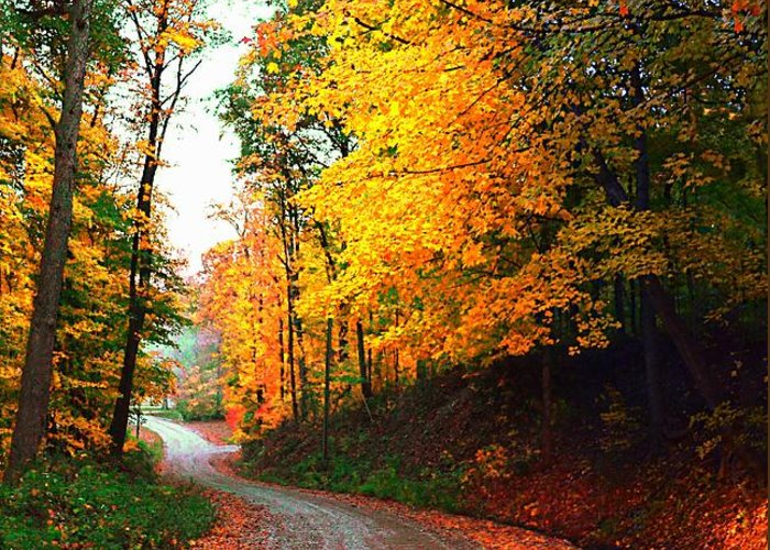 Country Greeting Card featuring the photograph Country Autumn Gravel Road by Julie Dant