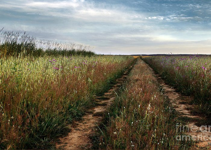 Adventure Greeting Card featuring the photograph Countryside Tracks by Carlos Caetano