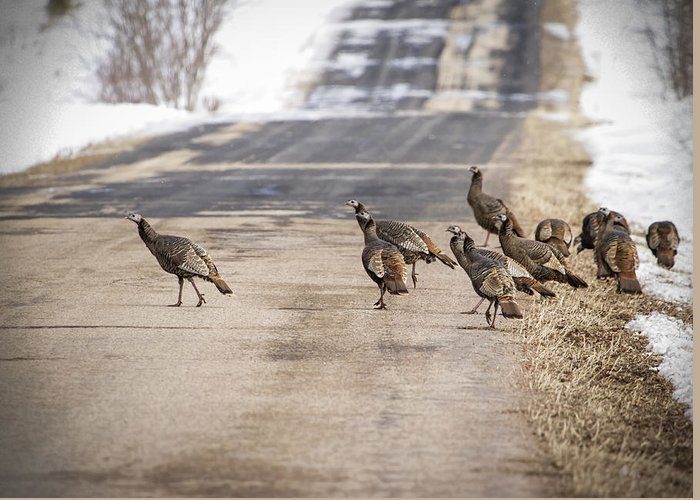 Eastern Wild Turkey (meleagris Gallopavo Silvestris) Greeting Card featuring the photograph County Road Crew by Thomas Young