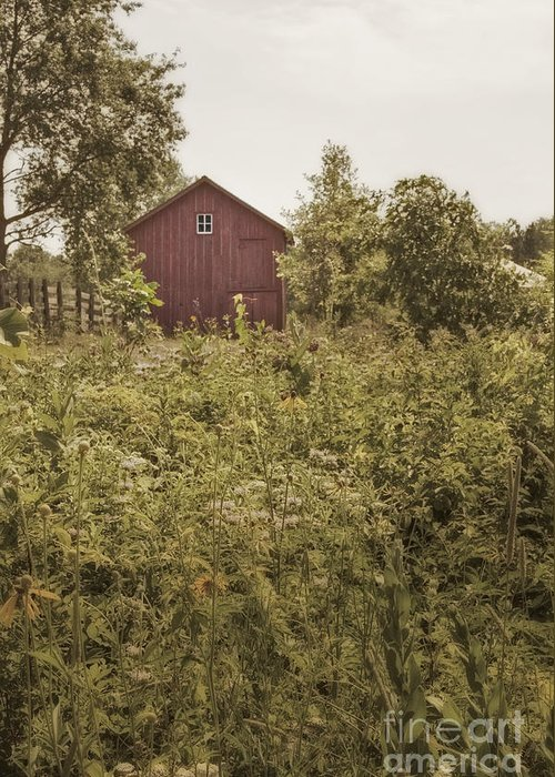 Old; Farm; Barn; Rural; Landscape; Outside; Outdoors; Roof; Small; Country; Countryside; Field; Red; Painted; Wood; Window; Wooden; Weeds; Grasses; Fence Greeting Card featuring the photograph Covered Barn by Margie Hurwich