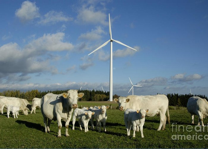 Sky Greeting Card featuring the photograph Cows And Windturbines by Bernard Jaubert