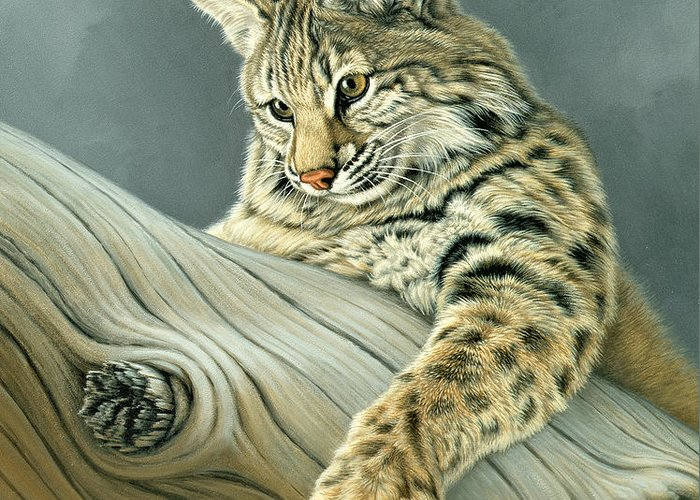 Wildlife Greeting Card featuring the painting Curiosity - Young Bobcat by Paul Krapf
