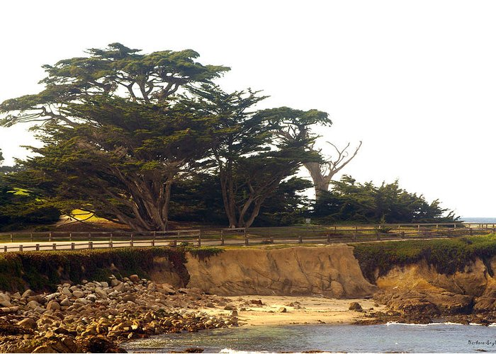 Barbara Snyder Greeting Card featuring the digital art Cypress Trees On 17 Mile Drive by Barbara Snyder