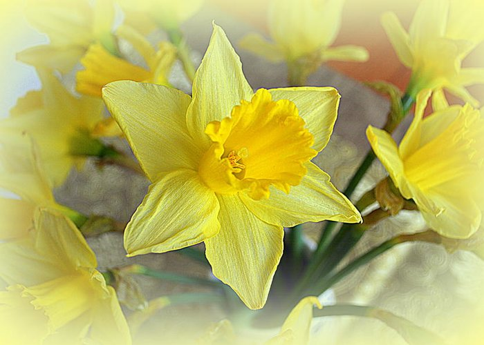 Daffodil Greeting Card featuring the photograph Daffodil by Bishopston Fine Art