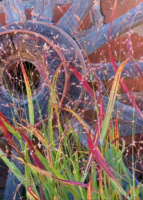 Fall;fallcolors;grass;pinos Altos;new Mexico Greeting Card featuring the photograph Dance Of The Wild Grass by Feva Fotos