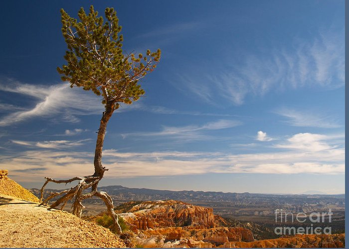 Landscape Greeting Card featuring the photograph Danse Sur Pointes by Alex Cassels