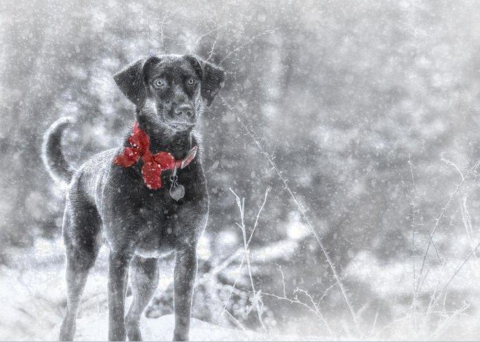 Sienna Greeting Card featuring the photograph Dashing Through The Snow by Lori Deiter