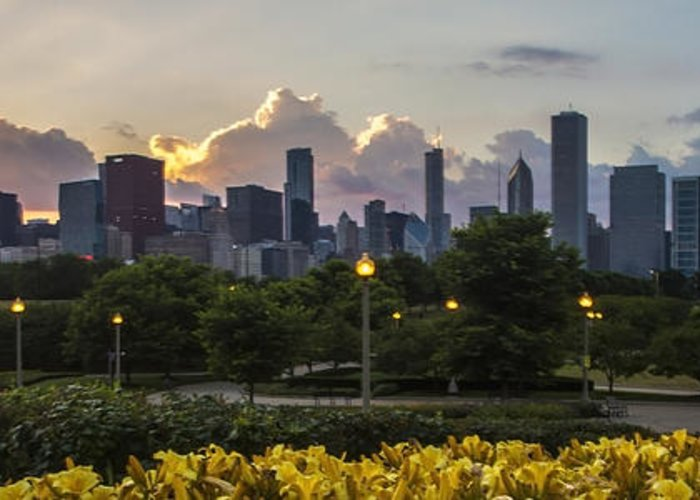 Yellow Day Lilys. Chicago Skyline Greeting Card featuring the photograph Day Lilys And Chicago Skyline In A 3 To 1 Aspect Ratio by Sven Brogren