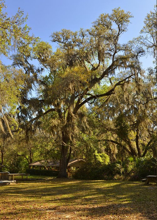 Ponce Greeting Card featuring the photograph De Leon Springs - Classic Old Florida by Christine Till