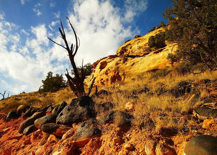 Rocks Greeting Card featuring the photograph Dead Tree Against The Blue Sky by Jeff Swan