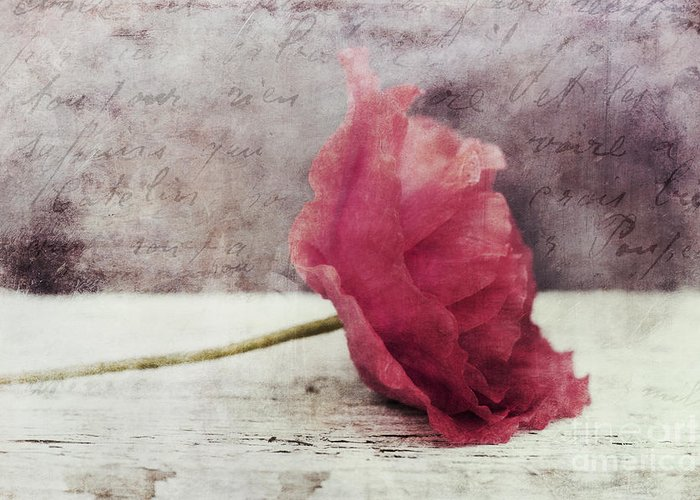Poppy Greeting Card featuring the photograph Decor Poppy Horizontal by Priska Wettstein