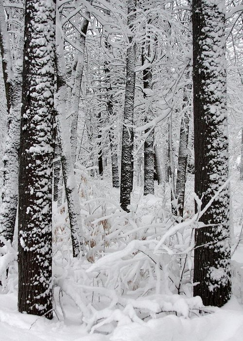 Winter Scene Greeting Card featuring the photograph Deep Snow In The Forest by Lynn-Marie Gildersleeve