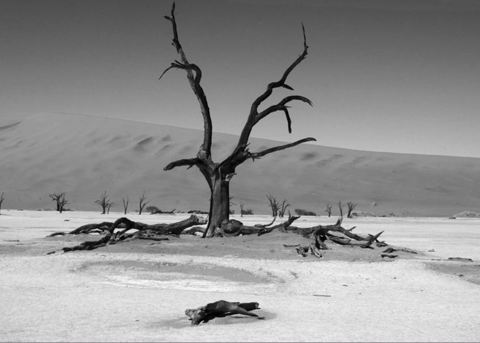 Africa Greeting Card featuring the photograph Desolation Row by Aidan Moran