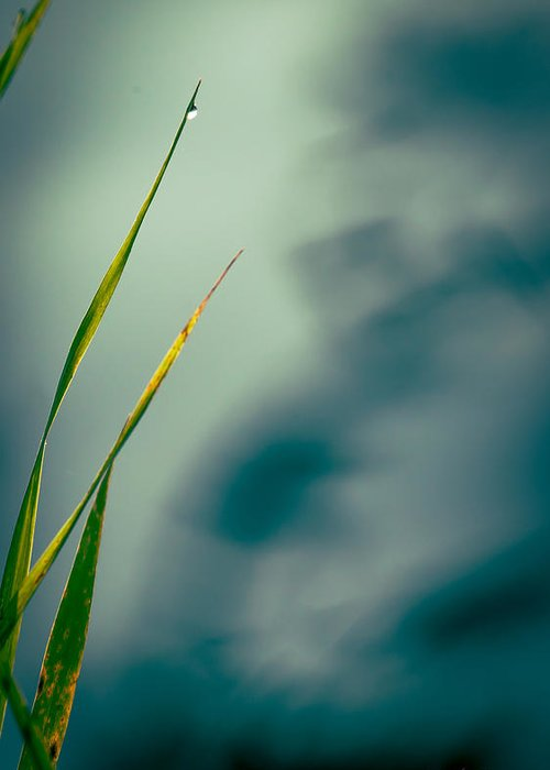 Grass Greeting Card featuring the photograph Dew Drop by Bob Orsillo