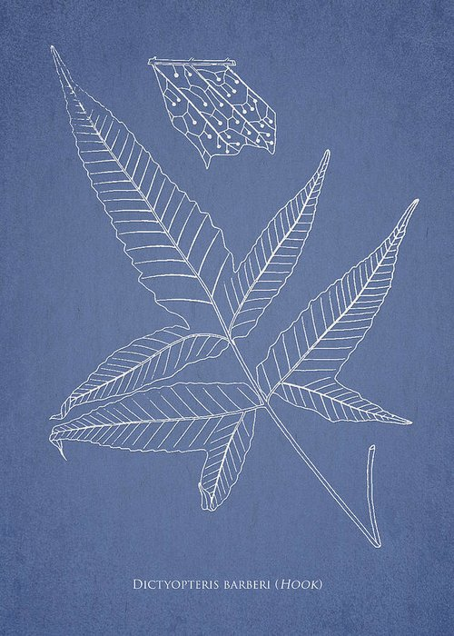 Fern Greeting Card featuring the drawing Dictyopteris Barberi by Aged Pixel