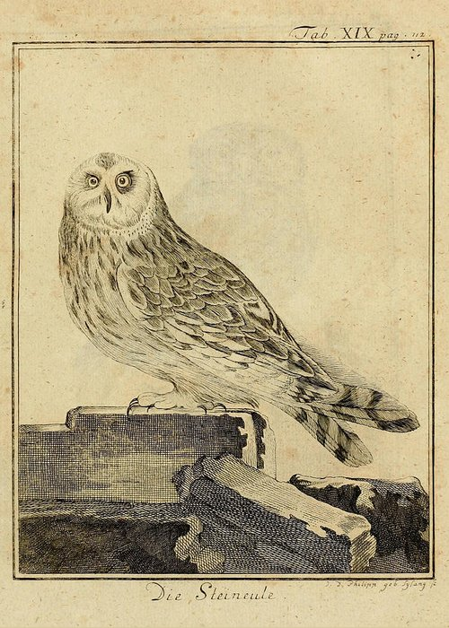 Stein Greeting Card featuring the drawing Die Stein Eule Or Church Owl by Philip Ralley