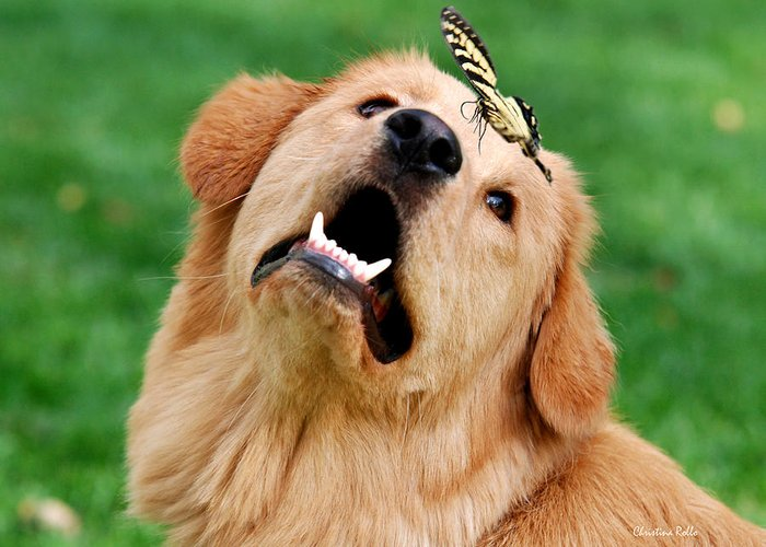 Golden Greeting Card featuring the digital art Dog And Butterfly by Christina Rollo