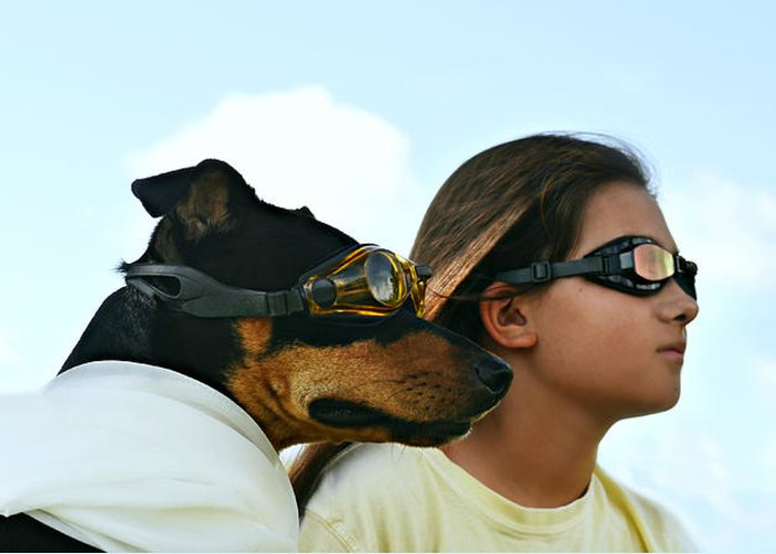 Laura Fasulo Greeting Card featuring the photograph Dog Is My Co-pilot by Laura Fasulo