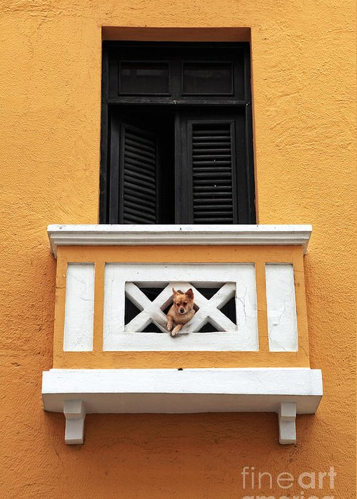 Dog Greeting Card featuring the photograph Dog by John Rizzuto