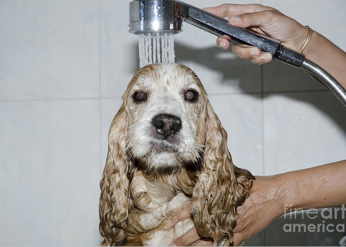 Dog Greeting Card featuring the photograph Dog Taking A Shower by Mats Silvan