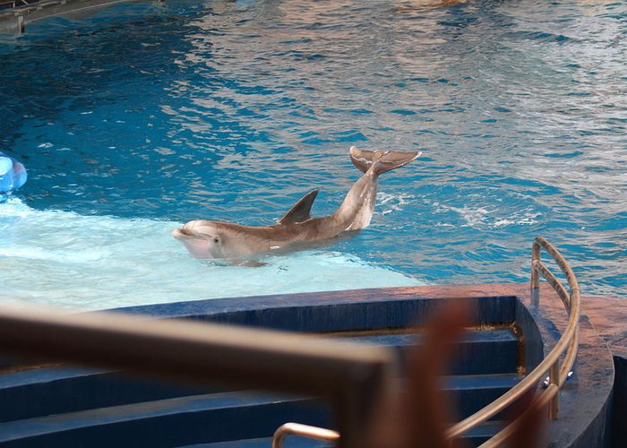 Inner Greeting Card featuring the photograph Dolphin Show - National Aquarium In Baltimore Md - 1212104 by DC Photographer