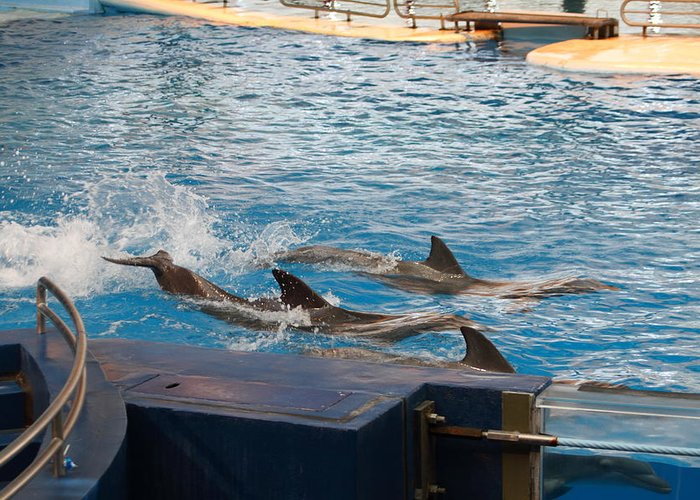 Inner Greeting Card featuring the photograph Dolphin Show - National Aquarium In Baltimore Md - 1212187 by DC Photographer